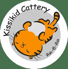 Kissikid Cattery : Scottish Fold